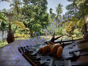 Роскошь тропической жизни